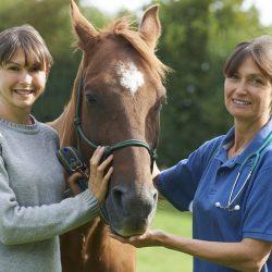 asesoramiento de equuservice