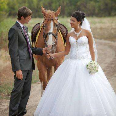 equuservice boda